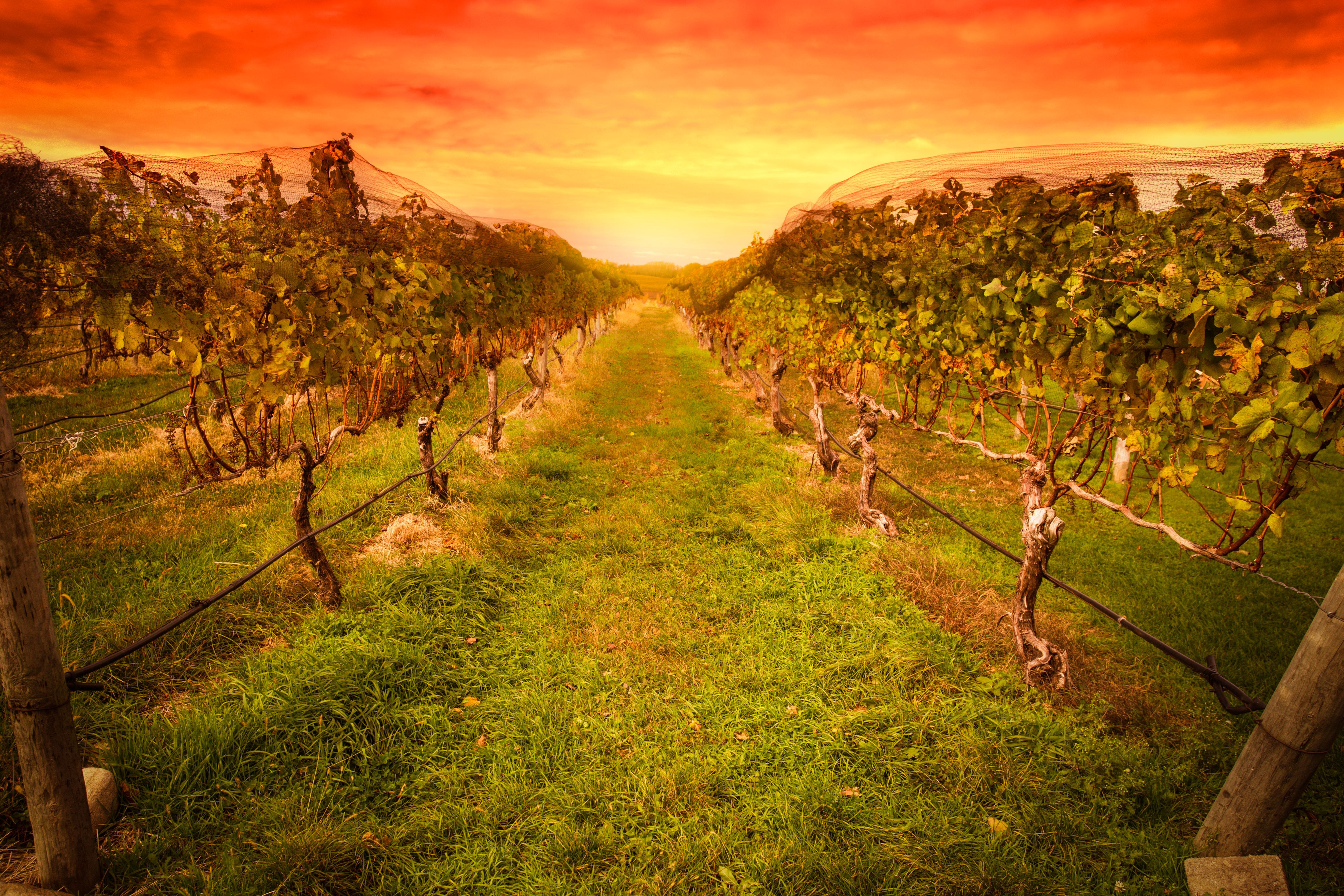 Winery Tour Napa Best