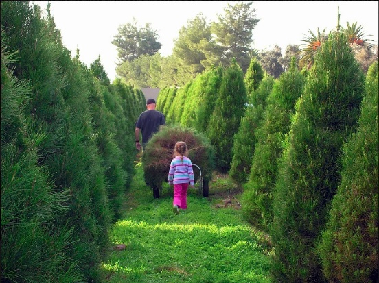 Family Christmas Tree Farm in San Diego, CA