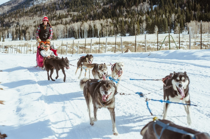 Dog Sledding at Luna Lobos in Park City, UT