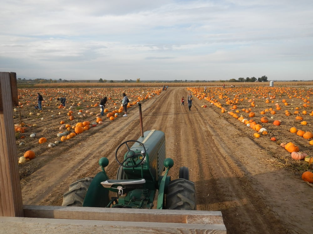 Pumpkin Patches around Denver 2