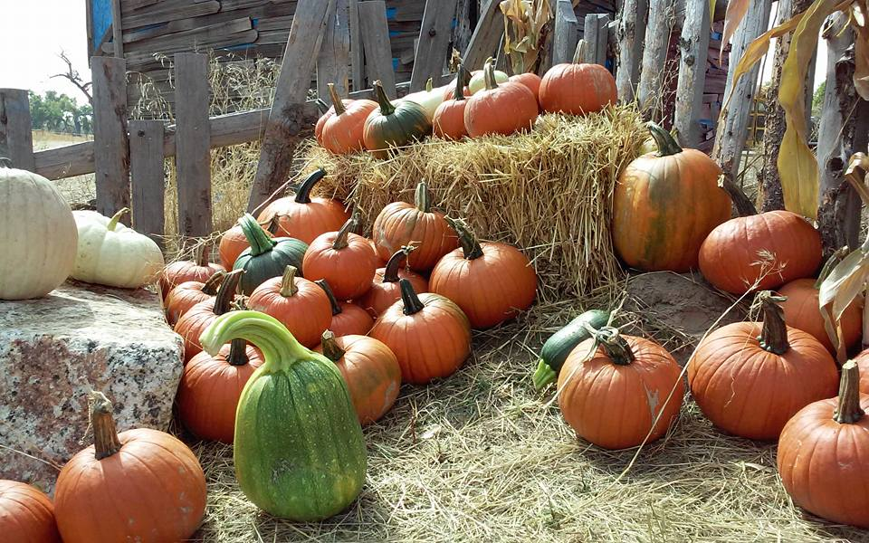 Pumpkin Patches around Denver 4