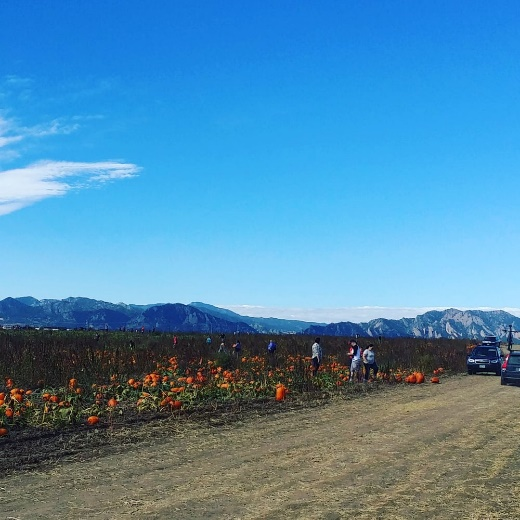 Pumpkin Patches around Denver 5
